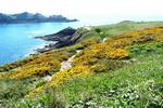 image BnB in brittany, Dol-de-Bretagne, near Dinan, Dinard, Cancale, Saint Malo and Mont saint Michel
